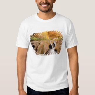 Cottonwoods in Autumn, Coyote Gulch, Glen Tee Shirt