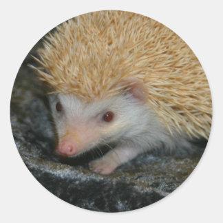 Cotty Cutie sticker