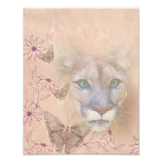 Cougar and Butterflies Photo
