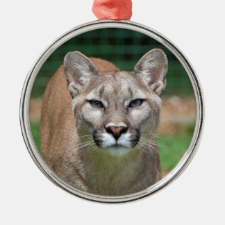 Cougar beautiful photo hanging ornament