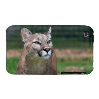 Cougar beautiful photo iphone 3G case mate tough iPhone 3 Cover
