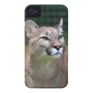 Cougar beautiful photo iphone 4 case mate