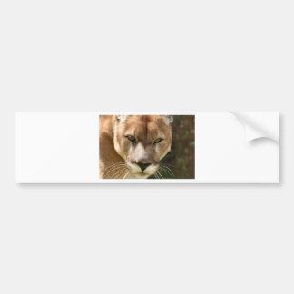 cougar eyes bumper sticker