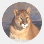Cougar Face Round Sticker