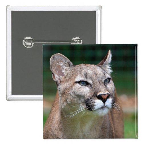 Cougar, mountain lion beautiful photo button, pin