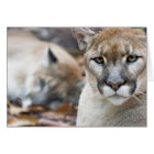 Cougar, mountain lion, Florida panther, Puma 2 Card