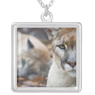 Cougar, mountain lion, Florida panther, Puma 2 Square Pendant Necklace