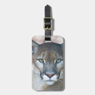 Cougar, mountain lion, Florida panther, Puma 2 Tags For Bags