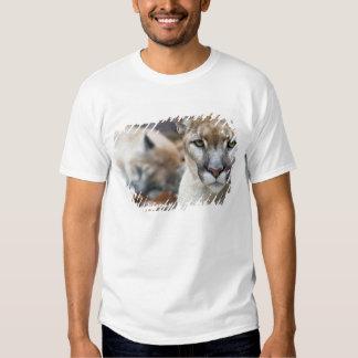 Cougar, mountain lion, Florida panther, Puma 2 Tshirt
