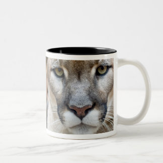 Cougar, mountain lion, Florida panther, Puma 2 Two-Tone Mug
