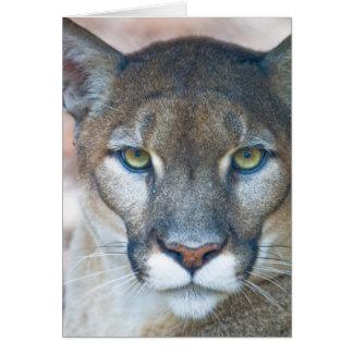 Cougar, mountain lion, Florida panther, Puma Greeting Card