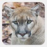 Cougar, mountain lion, Florida panther, Puma Sticker