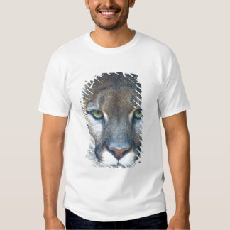 Cougar, mountain lion, Florida panther, Puma Tee Shirt