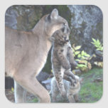 Cougar Mum and Cubs