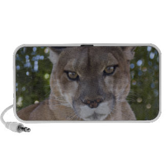 Cougar Pounce Speakers