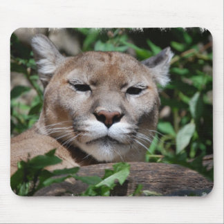 Cougar Predator Mouse Pad