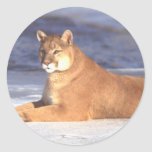 Cougar Resting Sticker