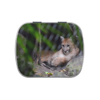 cougar sitting in cave brush strokes cat image c jelly belly tins