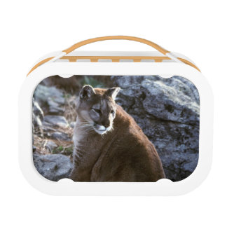 Cougar sitting lunch boxes