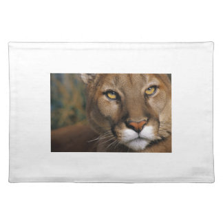 Cougar Stare Place Mats