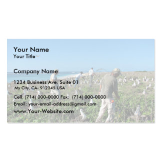 Counting Laysan Albatross Nests Business Card Template