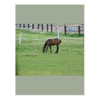 country life postcard