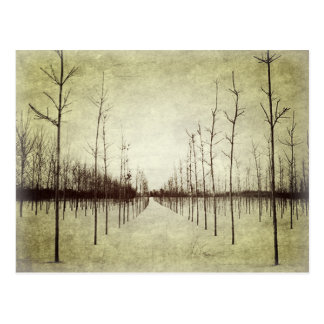 Country prairie rural landscape winter tree postcard