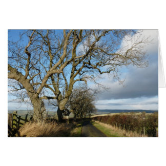 """Country Road"" Northumberland England Card"