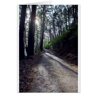 Country road through forest card