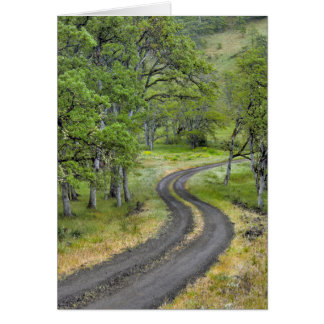 Country road through trees, Oregon Card