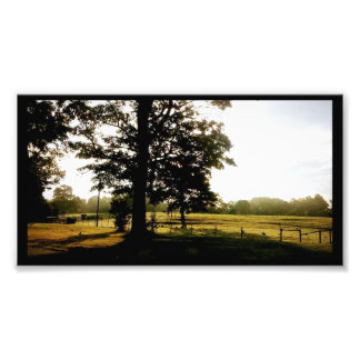 Country Scene, Farm, Old Farm Fence, Big Farm Tree Photo Print