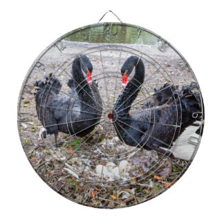 Couple black swans with eggs in nest dartboard with darts