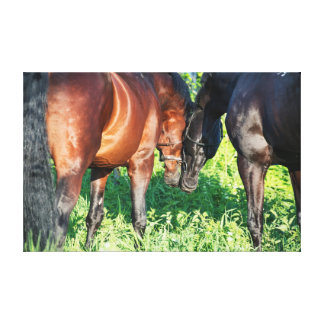 couple of sportive  horses. canvas print