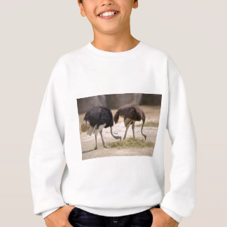 Couple Ostriches eating Sweatshirt
