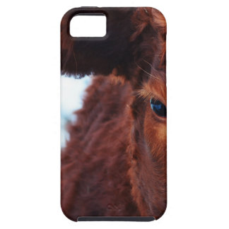 cow-174822 jpg cover for iPhone 5/5S
