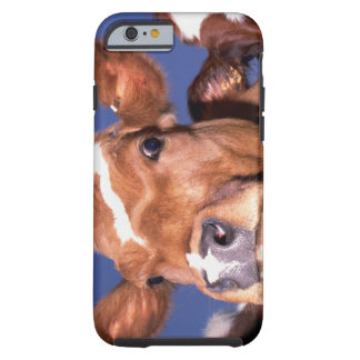 cow 2 iPhone 6 case