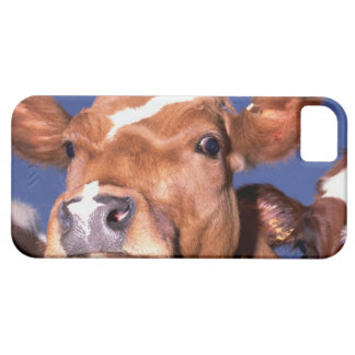 cow 2 iPhone 5 cases