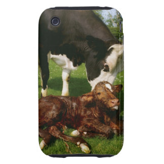 Cow and newborn calf tough iPhone 3 covers