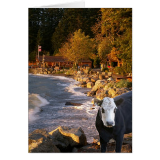 Cow at the Cabins Note Card