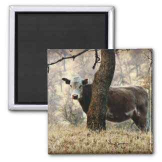 Cow behind Tree Refrigerator Magnets