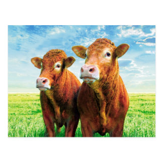 cow boys post cards