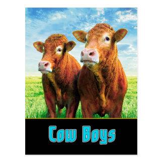 COW BOYS POSTCARD