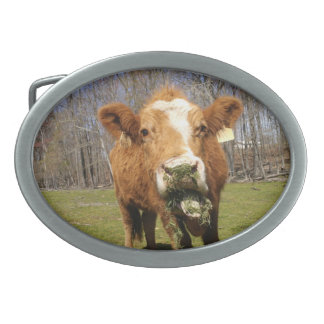 Cow Buckle Oval Belt Buckles