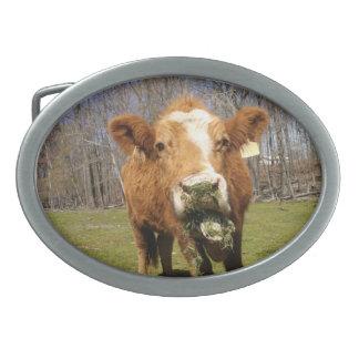 Cow Buckle Belt Buckles