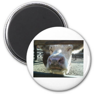 Cow By Bernadette Sebastiani Fridge Magnet