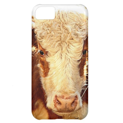 Cow iPhone 5C Covers