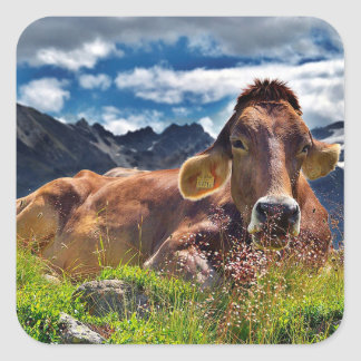 Cow Close up in HDR Sticker