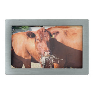 Cow eating hay on farm rectangular belt buckle