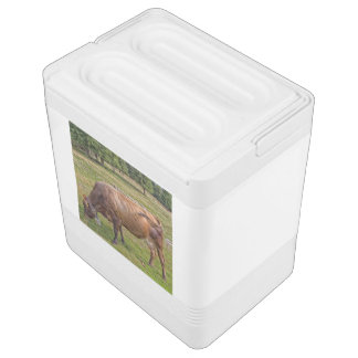 cow eating in a meadow cooler