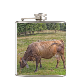 cow eating in a meadow hip flask